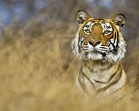 Kanha wildlife Tourism